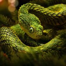 Dead Snake Found