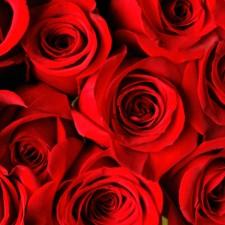 Valentine's Day Mind Dump