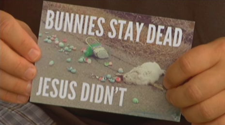 bunny Roadkill Bunny Evangelism