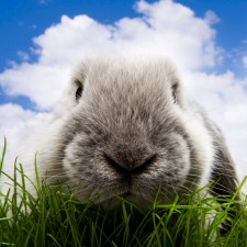 Roadkill Bunny Evangelism